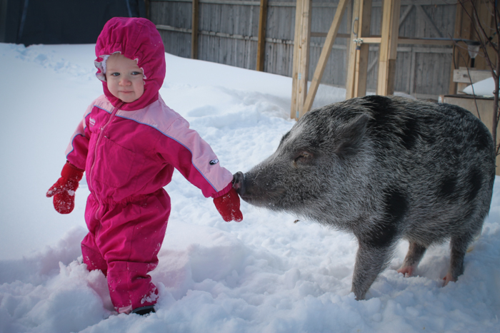 toddler in the snow pet pig