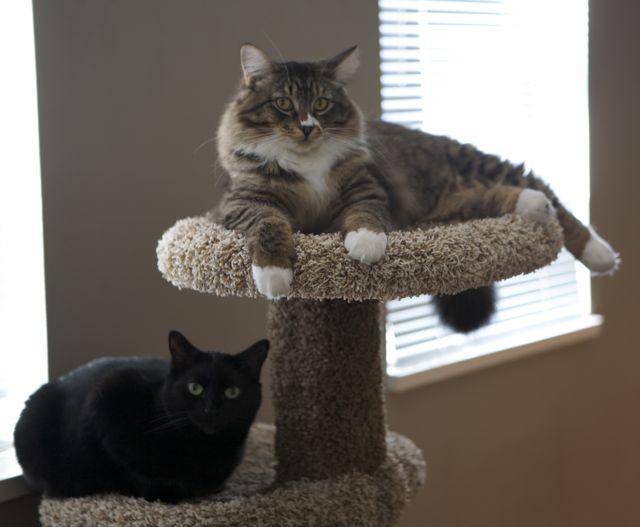 catsnewpost