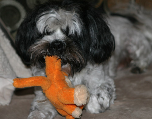 Tobie (Tim & Alicia's dog) loved this toy, he wouldn't put it down